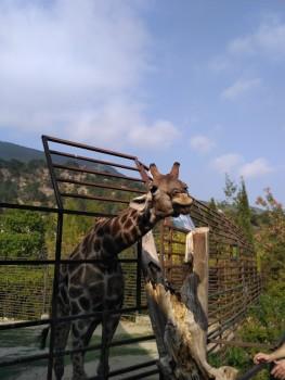 Ялта зоопарк Сказка