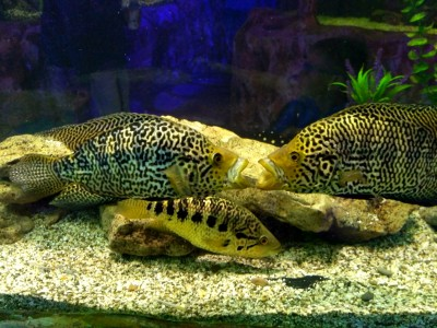 Евпатория аквариум
